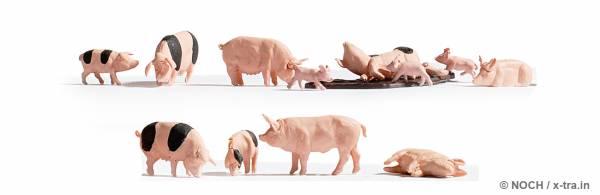 Schweine. NOCH 36712